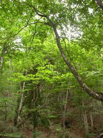 20080615-春の若杉峠は新緑と小鳥のさえずりに囲まれたすばらしい山でした.JPG