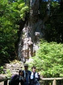 20090731-縄文杉は圧倒的に迫力.JPG