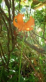 20180715-ozenflower35.jpg